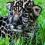 Балам появился на свет в зоопарке Техаса